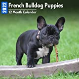 Calendar 2022 French Bulldog Puppies: Cute French Bulldog Puppy Photos Mini Calendar a Monthly Square Book Planner With Inspirational Quotes each Month