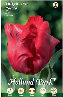 Holland Park bulbi da fiore di molte varietà e colori in sacchetto blister con foto (TULIPANI ROCOCO 5 bulbi)