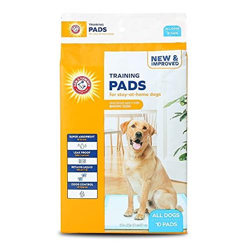 wee wee pads 10 pack