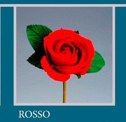 'Lot de 36 pièces, Bonbonnière Fleur Bouquet Fleur Rose cm 7 x 13 (ck5017) (Rouge)