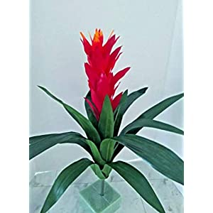 Artificial Bromeliad 21″ Silk Flower Floral Arrangements – Artificial Flowers #FWB01YN