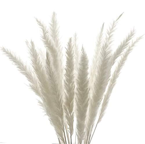 Plumeau de roseau naturel, petit herbe de pampa réelle et séchée, Pampas Grass, haute qualité, décoration de mariage, bouquet de fleurs blanches