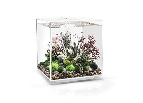 OASE biOrb CUBE 60 LED Aquarium, 60 Liter - Aquarien Komplett-Set mit LED Beleuchtung und patentiertem Filter-System, Acryl-Becken in Weiß