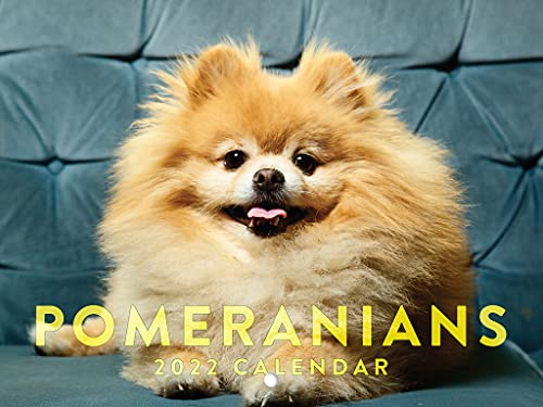 Pomeranians 2022 Wall Calendar Cute Funny Puppies Animals Dog Breed Pet Pomeranian Calendar Large 18 Month Calendar Monthly Full Color Thick Paper Pages Folded Ready To Hang Planner Agenda 18x12 inch