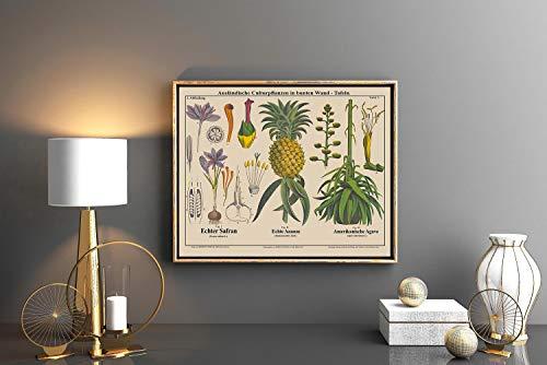 Rac76yd Saffraan Ananas en Eeuw Plant Botanische Kunst Landschap Botanische