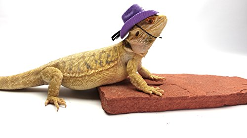 Carolina Designer Dragons' Bearded Dragon Cowboy Hat, Purple