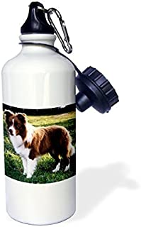 Wild Bramble Border Collie Tan And White Sports Water Bottle 21 Oz Twin Sides
