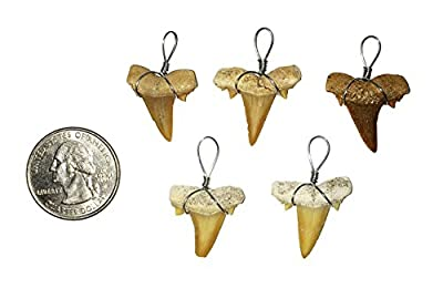 5 Wire Wrapped Fossilized Shark Teeth for Necklace