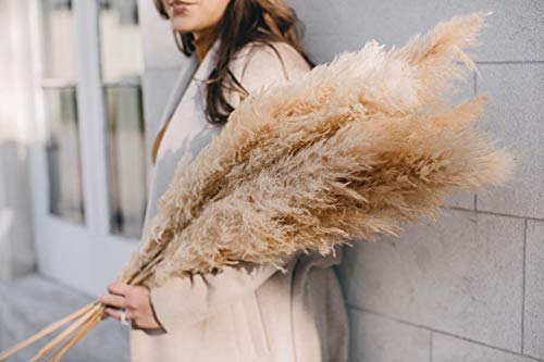"""Emir&Odin 40"""" inch 10 Stems Natural Dried Pampas Grass – Tall, Large and Fluffy, No Shedding No Stench, 10 pcs Stems and 40"""" (100cm) Length, for Home, Office, Wedding and Events Decor"""