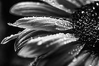 lovedomi 5x3ft 黒と白のクローズアップモノクロアート花水滴ひまわり写真背景写真スタジオブース背景家族休暇誕生日パーティー写真スタジオビニール素材