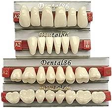 Dental Acrylic Resin Teeth Denture for Halloween Horror Prop