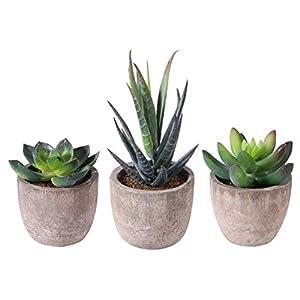 PRETYZOOM Feaux Succulent Plants with Pots Artificial Flower Cactus Fake Succulent Plants Lotus Landscape Decorations 3PCS