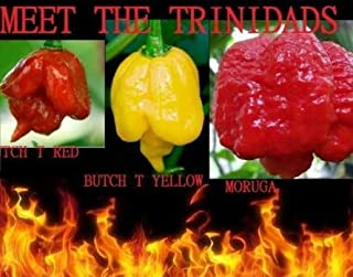 Seeds Combo Pack Trinidads Butch T Red & Yellow, Moruga Scorpion Hot Pepper Get 20 Seeds #EL01YN