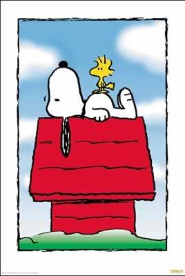 Peanuts–Snoopy auf Hundehütte–68,5x 101,5cm zeigt/Poster