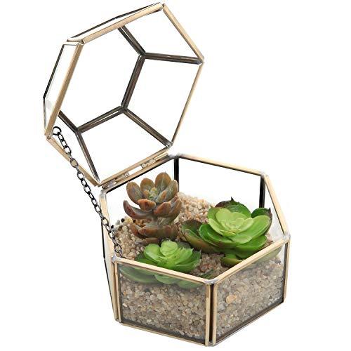 4.75 inch facet zeshoekig helder glas en messing metalen scharnierende bovenste deksel plant terrarium doos/tafelblad Display Case