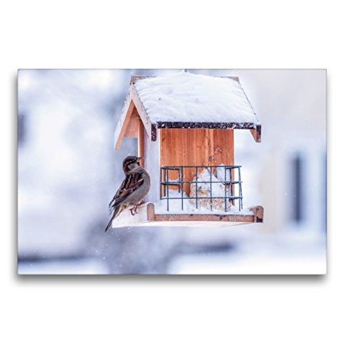 CALVENDO Premium Textil-Leinwand 75 x 50 cm Quer-Format Am Vogelhaus, Leinwanddruck von Marianne Drews