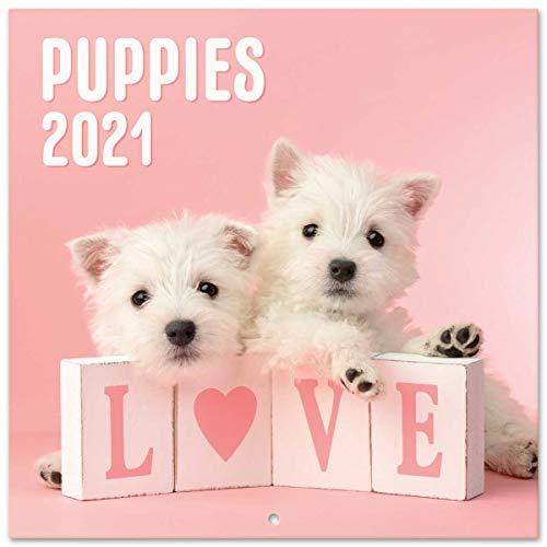 Grupo Erik CP21067 Calendario 2021 da Muro Dog Simon K. & Greg C, calendario cani 2021, 16 mesi, 30 x 30 cm