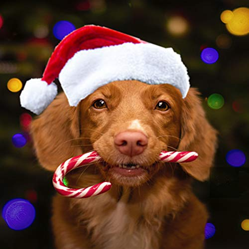 FUDINA Dog Santa Hat - Dog Christmas Costume, Santa Costume Hat for Dogs,Dog Christmas Outfit for Holloween, Christmas,Party, Photos