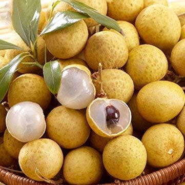 Pets Delite® Longan Seeds Live Drachenauge Exotic Longan Dimocarpus Sƒ¸e Tropische Frucht Baum Samen - 4 Teile/beutel