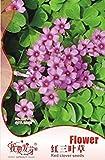 Paquete Original de 200 Semillas/Pack, Semillas de trébol Rojo, jardín en Maceta Cuatro Semillas de trébol de la Hoja del trébol Rojo, Plantas Flor balcón