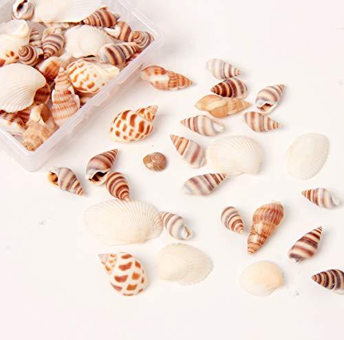 Ira Pollitt 200-210 Pcs Tiny Natural Mixed Ocean Sea Shells Tiny Miniature Beach Critter Seashells Variety Beach Decor Crafts for Arts & Crafts Projects, Home Decoration, Fish Tank Vase Fille (4 Pack)