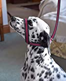 FIGURE OF 8 SOFT DOG LEAD HEADCOLLAR HALTER ALL IN ONE 2 OR 3 METRE. ANTI PULL. HANDMADE