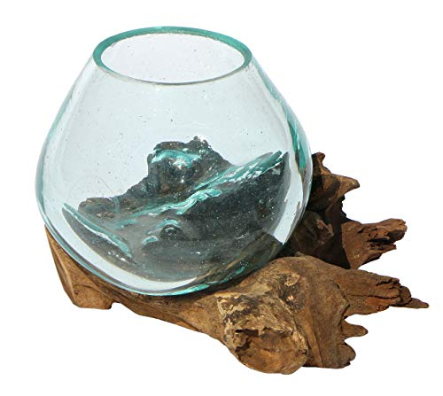 Balibarang-Shop Geschenk Deko Gamal Wurzelholz B-Ware Glasvase Ø Glas 10 cm Wurzel Holz Teakholz Vase Glas XS