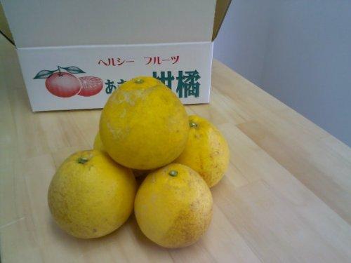 【訳あり】減農薬 熊本県天草産 晩柑 約10kg 小玉サイズ加工用 ジューシーオレンジ