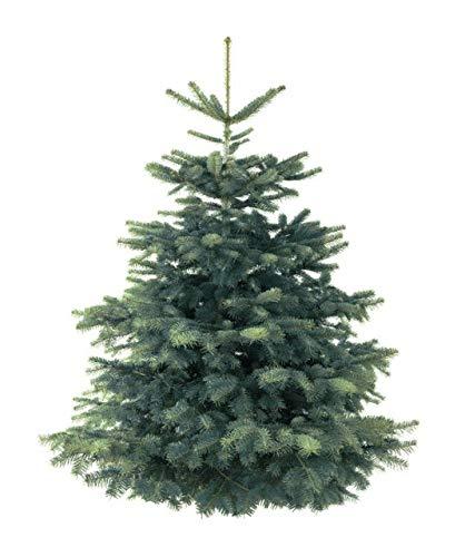 Weihnachtsbaum Set 10 Pflanzen ideal zum Aufpflanzen von Weihnachtsbäumen Nordmanntanne 5 Nordmanntannen + 5 Nobilis Tannen günstig als Set Abies nordmanniana Wurzelware