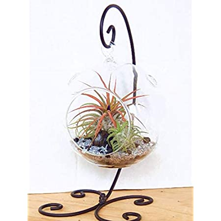 Amazon Com Air Plant Terrarium Kit With 2 Tillandsia Air Plants Black And Silver Rocks And Black Metal Stand 5 Round Glass Pet Supplies