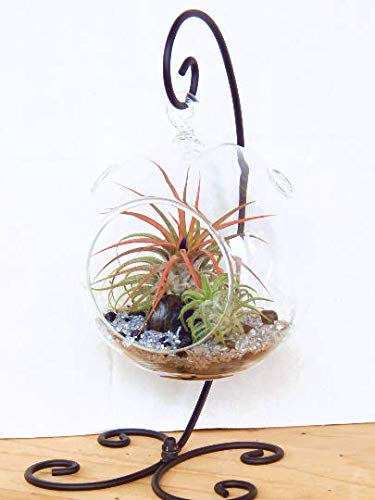 Air plant terrarium with stand