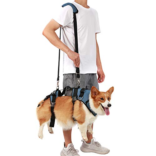 COODEO Dog Lift Harness, Pet Legs Support & Rehabilitation vest Lift Adjustable Padded Straps for old, Disabled, Joint Injuries, Arthritis, Loss of Stability, senior Dogs Walk & Up and Down Stairs (M)