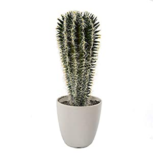 Fashionable Artificial Plastic with Thorns Cactus Potted Plant, Succulent Small Bonsai, Home Bedroom Landing Fake Flower Ornament, 9X28cm