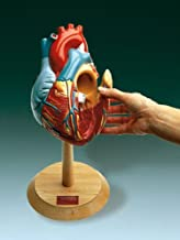 Heart Model Giant with Interior Doors 2x Life Size