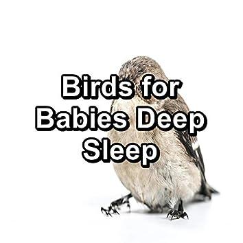 Birds for Babies Deep Sleep