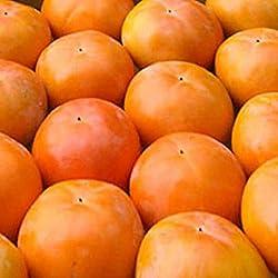 【西日本産】訳あり 富有柿 大きさお任せ 10kg