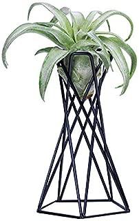 ADSRO Air Plant Holder, Air Plant Stand Air Plant Racks Tillandsia Stands Desktop Vertical Vase Multifunctional Vertical Flower Pot(Black)