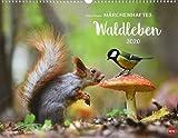 Vadim Trunov: Waldtiere Posterkalender. Wandkalender 2020. Monatskalendarium. Spiralbindung. Format 44 x 34 cm