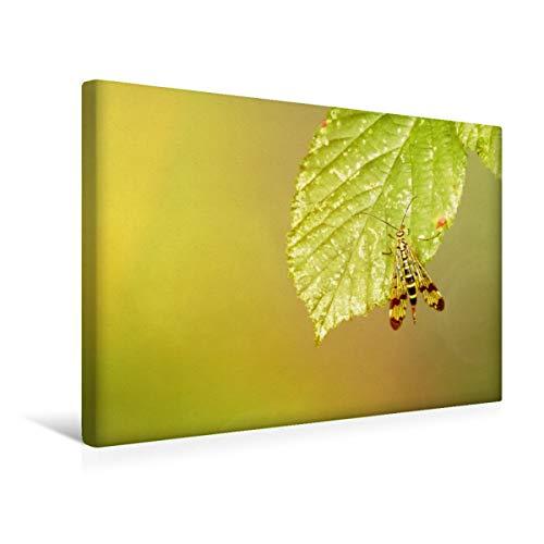 CALVENDO Premium Textil-Leinwand 45 cm x 30 cm quer, EIN Motiv aus dem KalenderIm Rausch der Insekten   Wandbild, Bild auf Keilrahmen, Fertigbild auf echter Skorpionsfliege Tiere Tiere
