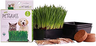 Handy Pantry Organic Cat Grass Kit - Includes 3 Trays, 3 Soil Pucks, and 3 Packs Non GMO Wheatgrass Seed - A Healthy Treat for Cats, Dogs, Rabbits, and More
