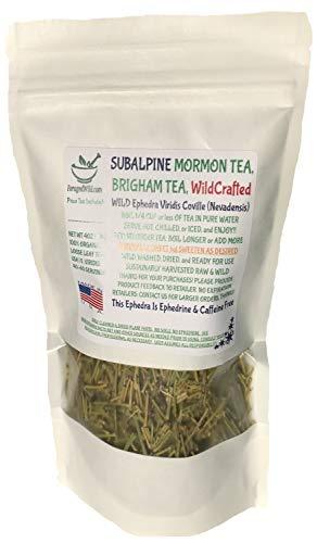 Mormon Tea - Brigham Tea - Ephedra Tea - SUBALPINE | USA WILDCRAFTED 1/4LB Dried