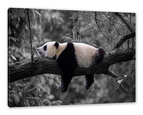 Pixxprint Schlafender Panda auf Baumstamm B&W Detail als Leinwandbild/Größe: 100x70 cm/Wandbild/Kunstdruck/fertig bespannt