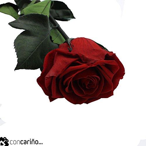 Mundo Eterno Rosa Preservada 35cm Crema
