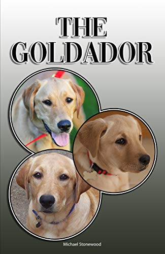 The Goldador: A Complete and Comprehensive Owners Guide to: Buying, Owning, Health, Grooming, Training, Obedience, Understanding and Caring for Your Goldador