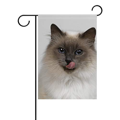 YATELI Ragdoll Cat Portrait Garden Flag Banner 12 x 18 Pollici Decorativo Prato e casa a Doppia Faccia