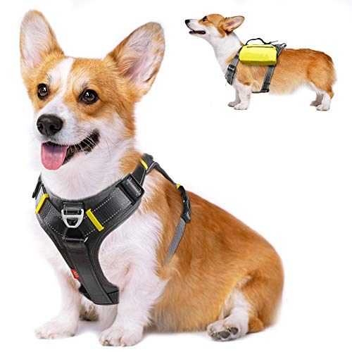 Dog Harness With Pocket