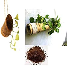 RAREPRODUCTS Bamboo Combo Planter Hanging POTS with Coco PEAT