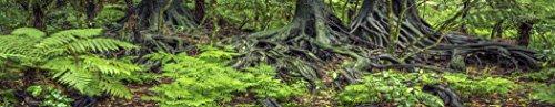 Carolina Custom Cages Reptile Habitat Background; Rain Forest Ferns & Roots, for 48Lx18Wx18H Terrarium, 3-Sided Wraparound