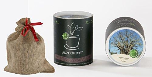 Seedeo Anzucht-Geschenkset Affenbrotbaum (Adansonia digitata)