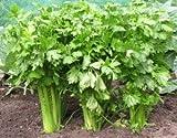 Celery Tall Utah...image